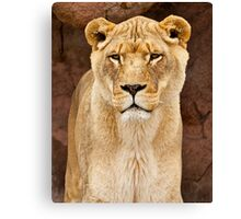 African Lion Dry Brush Canvas Print