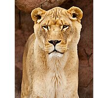 African Lion Dry Brush Photographic Print