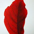 Red Leaf  by YourHum