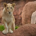 Lion Cub by PrecisionImages