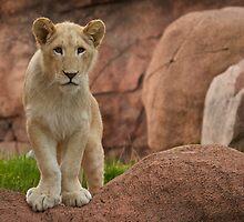 Lion Cub by PrecisionImages