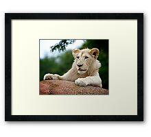 Lion Cub Dry Brush Framed Print