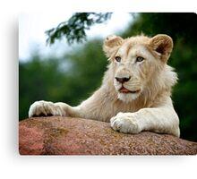 Lion Cub Dry Brush Canvas Print