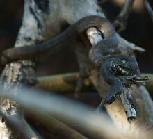 Serpent in a tree by Scott Dovey