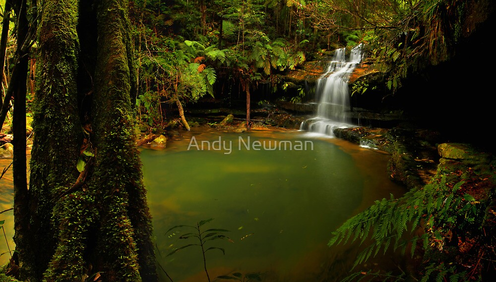 Blue Mountains NSW. by Andy Newman
