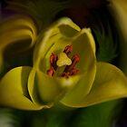 Iris by Nicole  Markmann Nelson