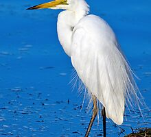 White Heron. by Nicholas Griffin