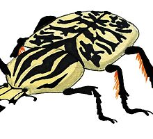 Goliath Beetle watercolour by Hannah-Hitchman