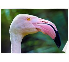 Face To Face With A Pink Flamingo. Poster