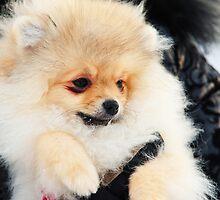 A Little Cutie II by JennyRainbow