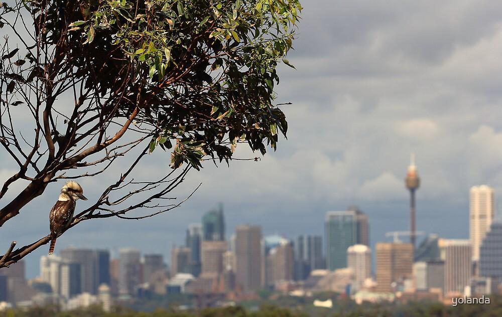 Kookaburra Skyline by yolanda