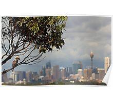 Kookaburra Skyline Poster