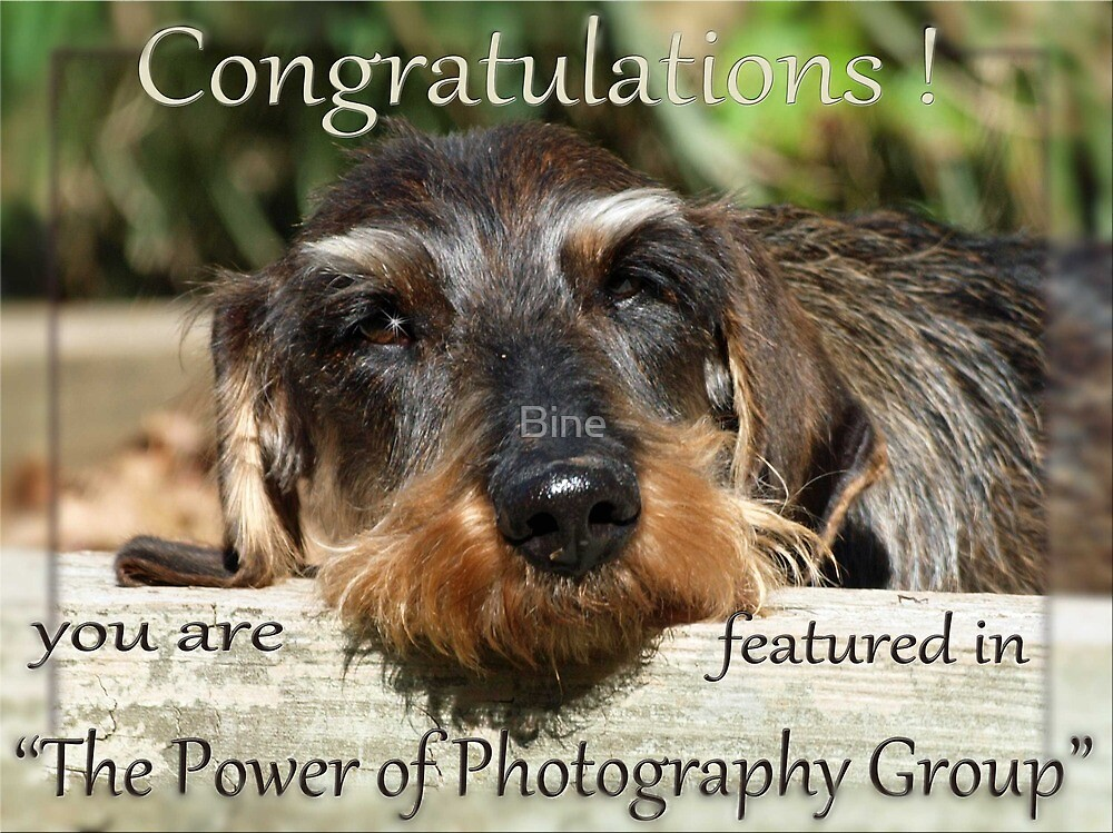 """Group Banner - """"The Power of Photography"""" by Bine"""