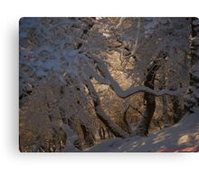 Into the woods of Snow Canvas Print