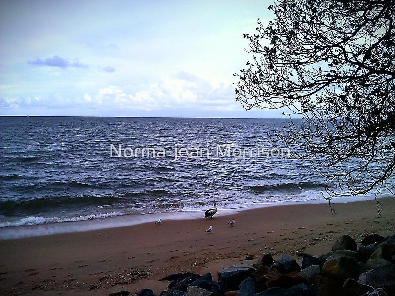 beach birds  by Norma-jean Morrison