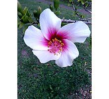 summer flower  Photographic Print