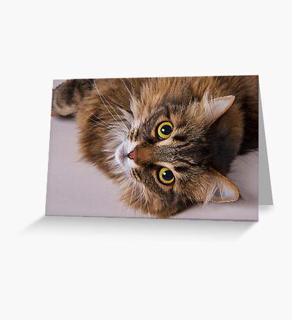 Domestic Medium Hair Cat Greeting Card