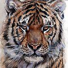 Tiger 779 by schukinart