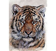 Tiger 779 Photographic Print