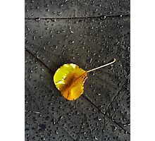 Leaf Drops  Photographic Print