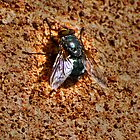 fly on the wall.  by loutolou