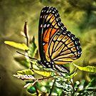 Monarch by Joe Bledsoe