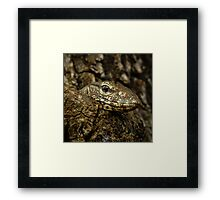 Varanus in tree Framed Print