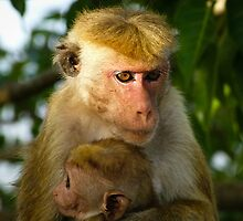 Macaque with baby by Inez Wijker