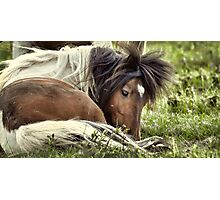 Splendor in the Grass  Photographic Print