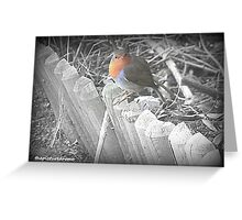 Robin Red Breast Greeting Card