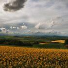 Golden Fields by Stephen Cullum