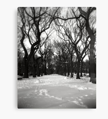 Trees in the Park Canvas Print