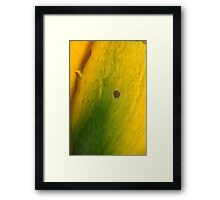 climbing petals out Framed Print