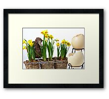 Easter eggs and daffodils Framed Print