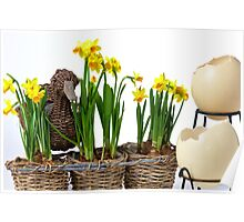 Easter eggs and daffodils Poster