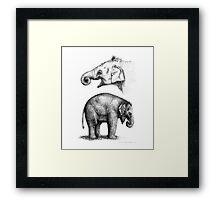 Baby elephant study G008-SK016 Framed Print
