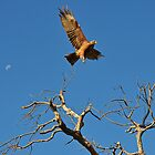 The Kite, The Moon, The Tree by DebbyTownsend