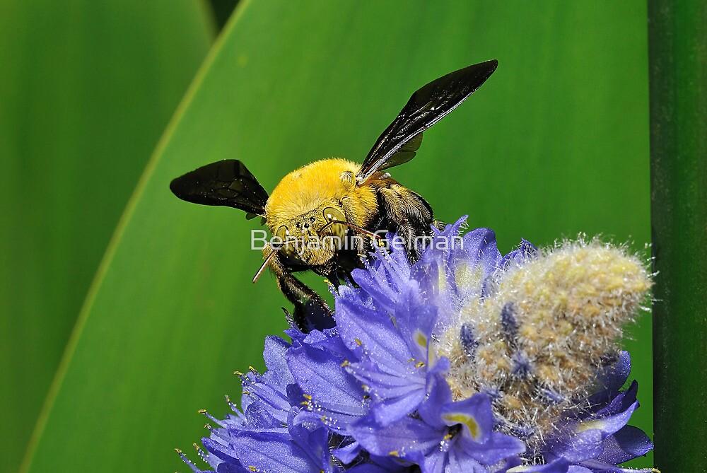Bublebee by Benjamin Gelman