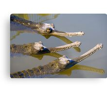 Conspiracy crocodiles Metal Print