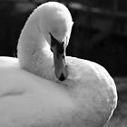 The Swan  by RuariFieldPics