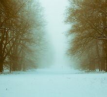 Nowton Park,Winter,Bury St Edmunds,Suffolk,UK by Suffolk Photography