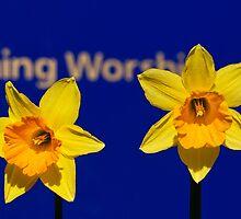Worships The Daffodils by Susie Peek