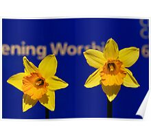 Worships The Daffodils Poster