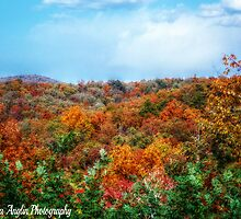 Autumn Days by Donna Anglin Husband