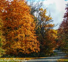 Autumn Drive by Donna Anglin Husband