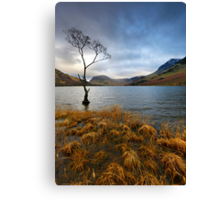 Lone Tree at Buttermere Canvas Print