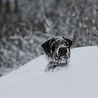 Snow Dog by Lynne69
