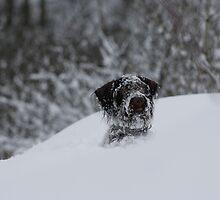 Snow Dog by Lynne69