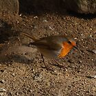 Robin Red Breast by Kat Simmons
