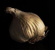 Allium Sativum 'Cristo' by Nigel Bangert